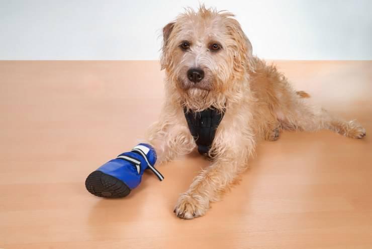 Frattura della zampa del cane