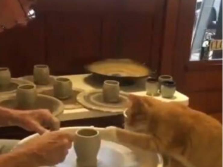 Gattino fare ceramica tornio