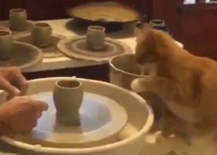 Gatto aiuta proprietario fare ceramica tornio VIDEO