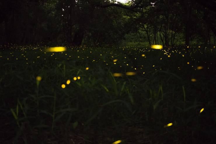 lucciole branco luminoso