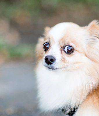 paure del cane fobie