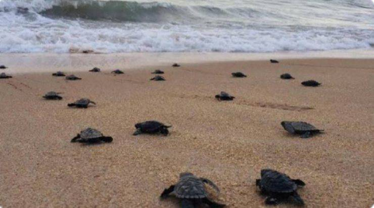 lockdown schiusa tartarughe