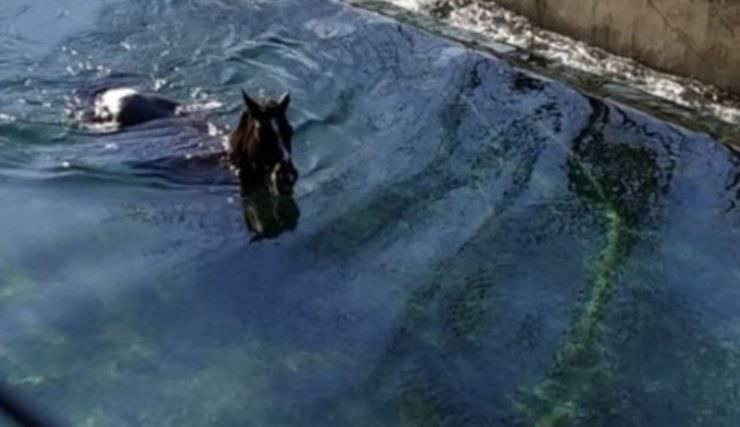 cavalli intrappolati torrente