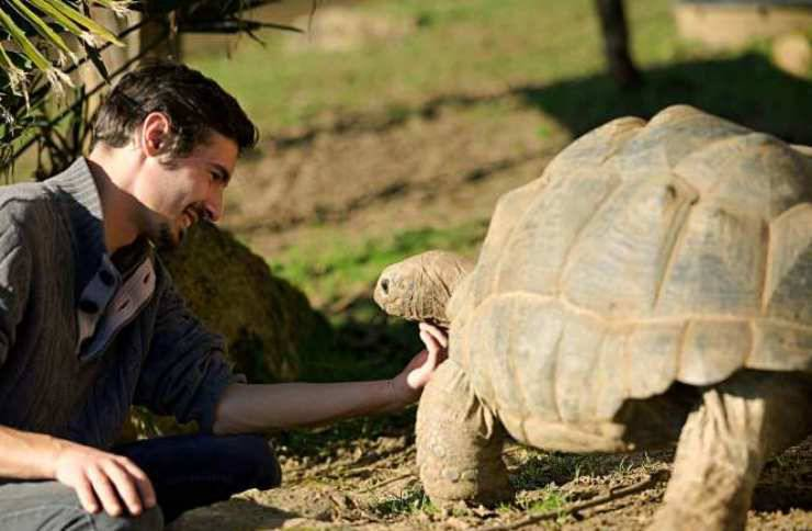 coccole tartaruga