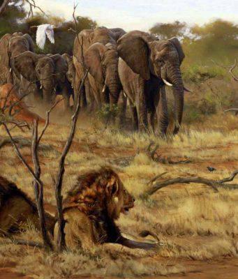 animali africani strani