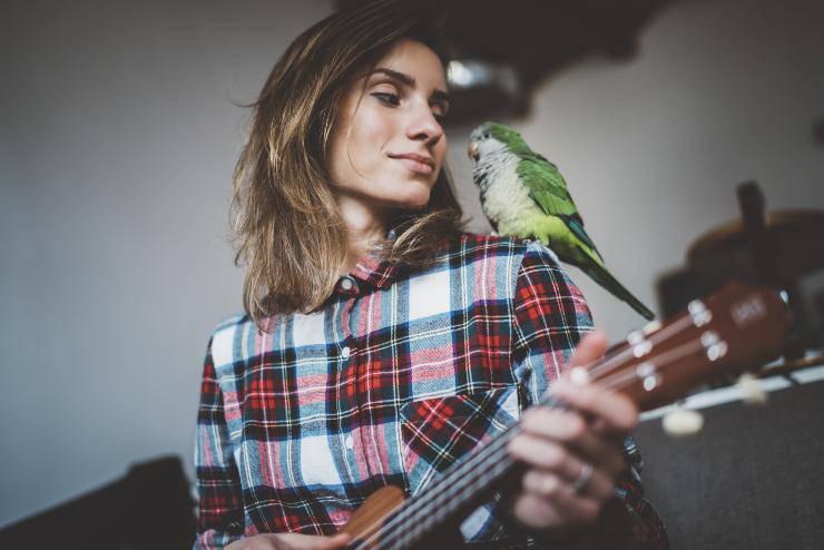 ai pappagalli piace la musica