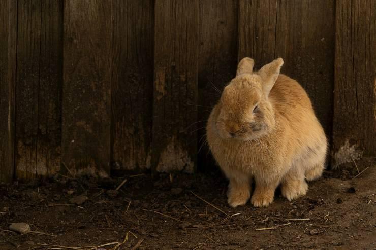 Coniglio spaventato