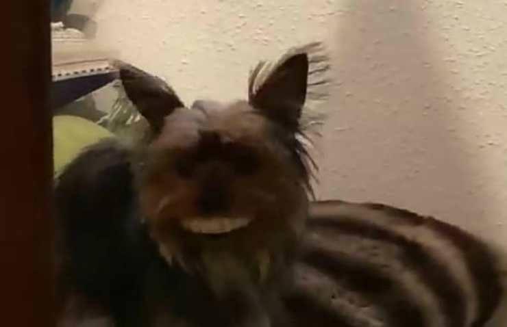 Lo spirito giocoso della cagnolina (Foto video)