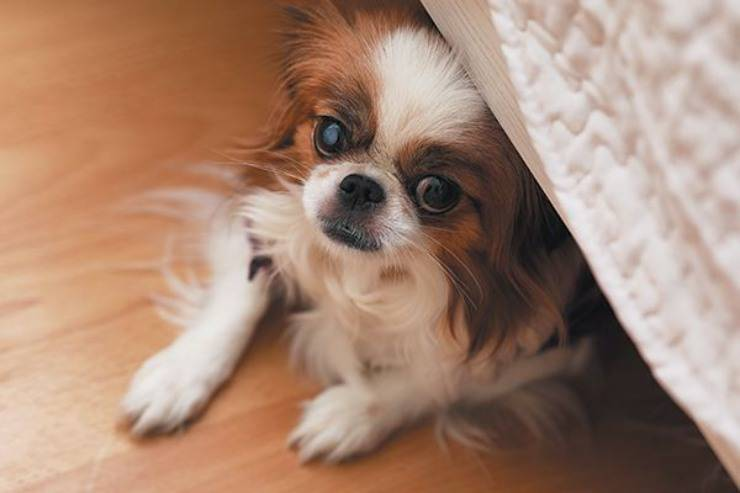 cane fobia paure