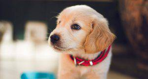 Il cane può mangiare omogeneizzato per bimbi?