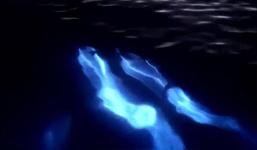 delfini bioluminescenti video