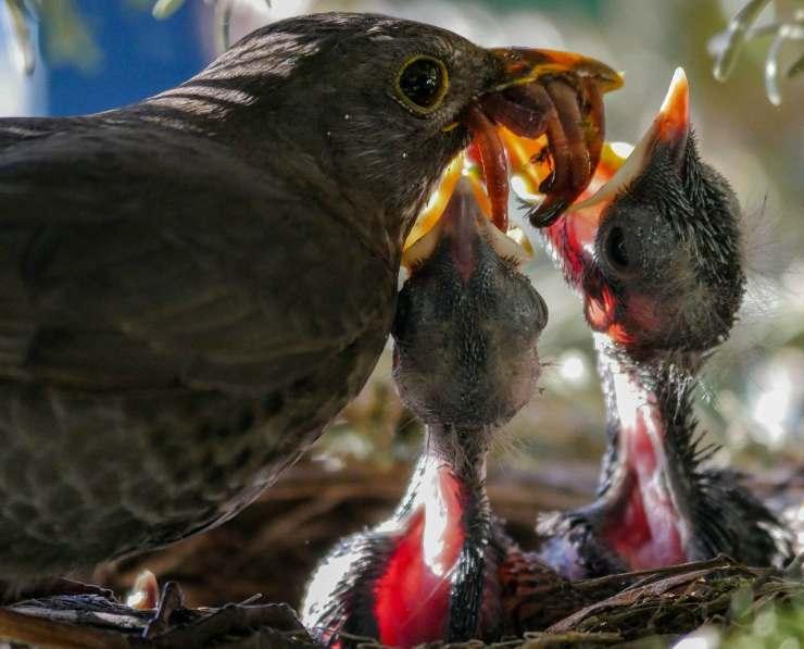 Perché gli uccelli fanno il nido