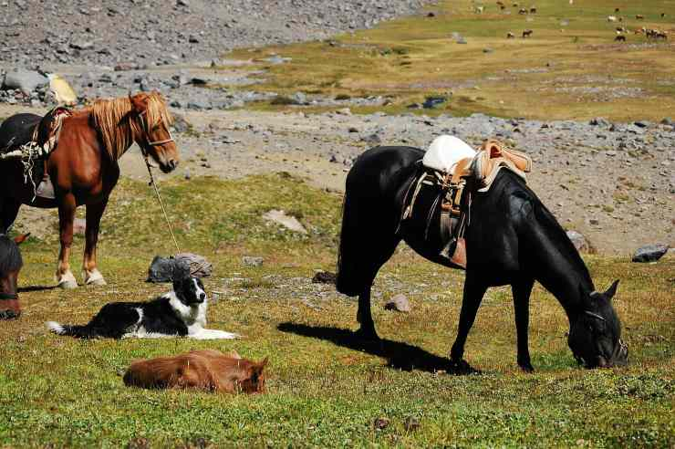cani cavalli