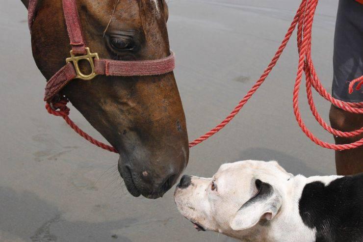 cane cavallo giocare