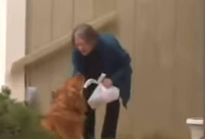 cane consegna spesa coronavirus