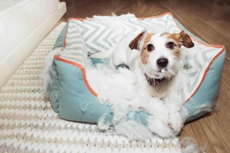 come impedire al cane di distruggere il suo letto