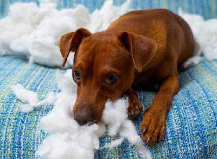 cane distrugge