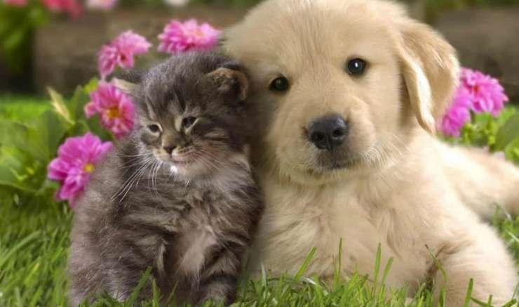 Cucciolo di cane e gatto insieme Facebook