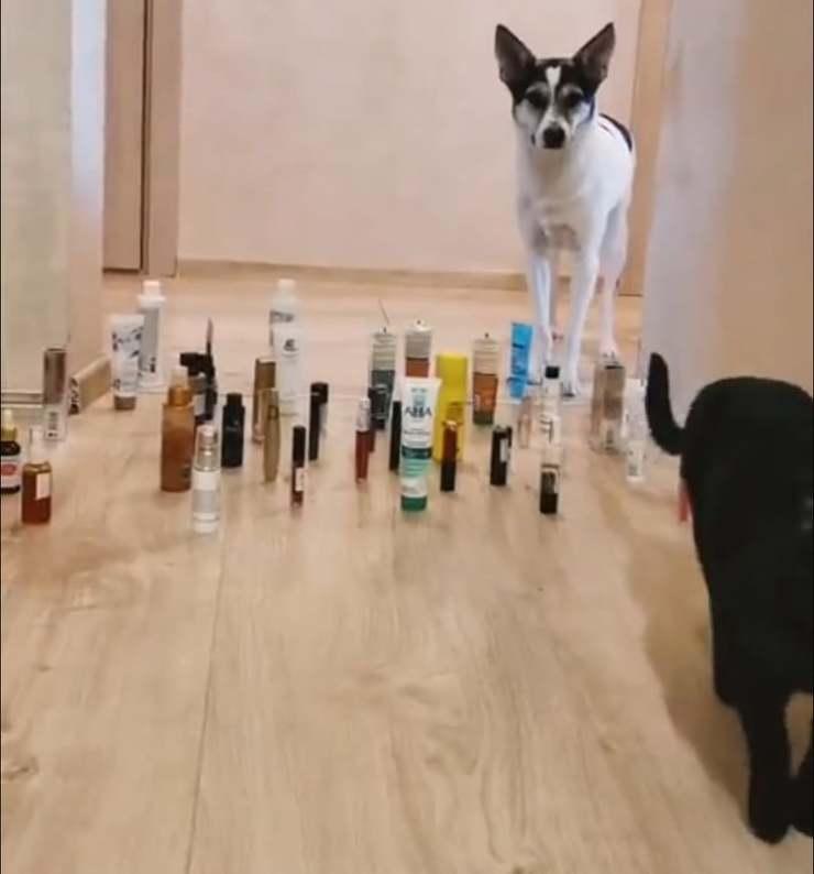 cane e gatto ostacoli