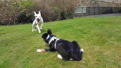 cane guida cucciolo cieco