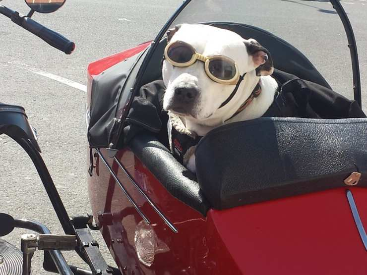 cane occhiali