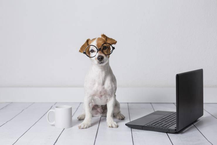 i cani possono aver bisogno degli occhiali