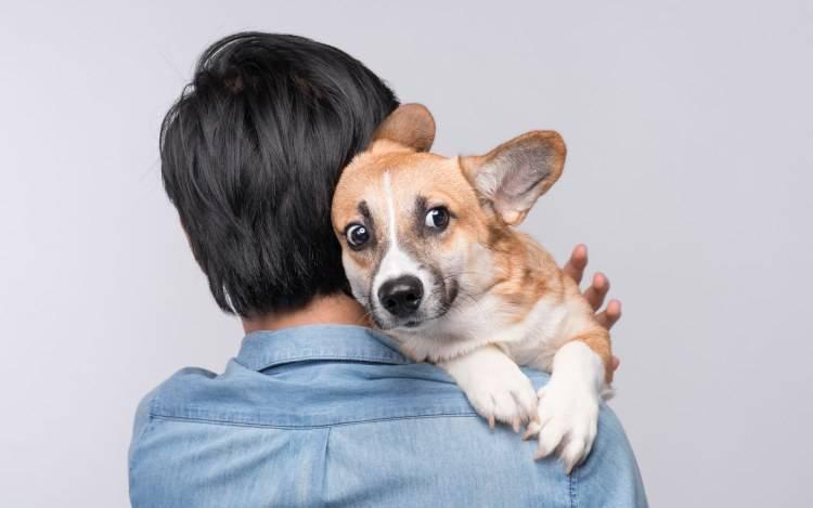 attacchi di panico cane