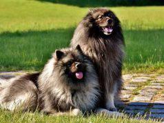 il pelo del cane può trasportare il virus
