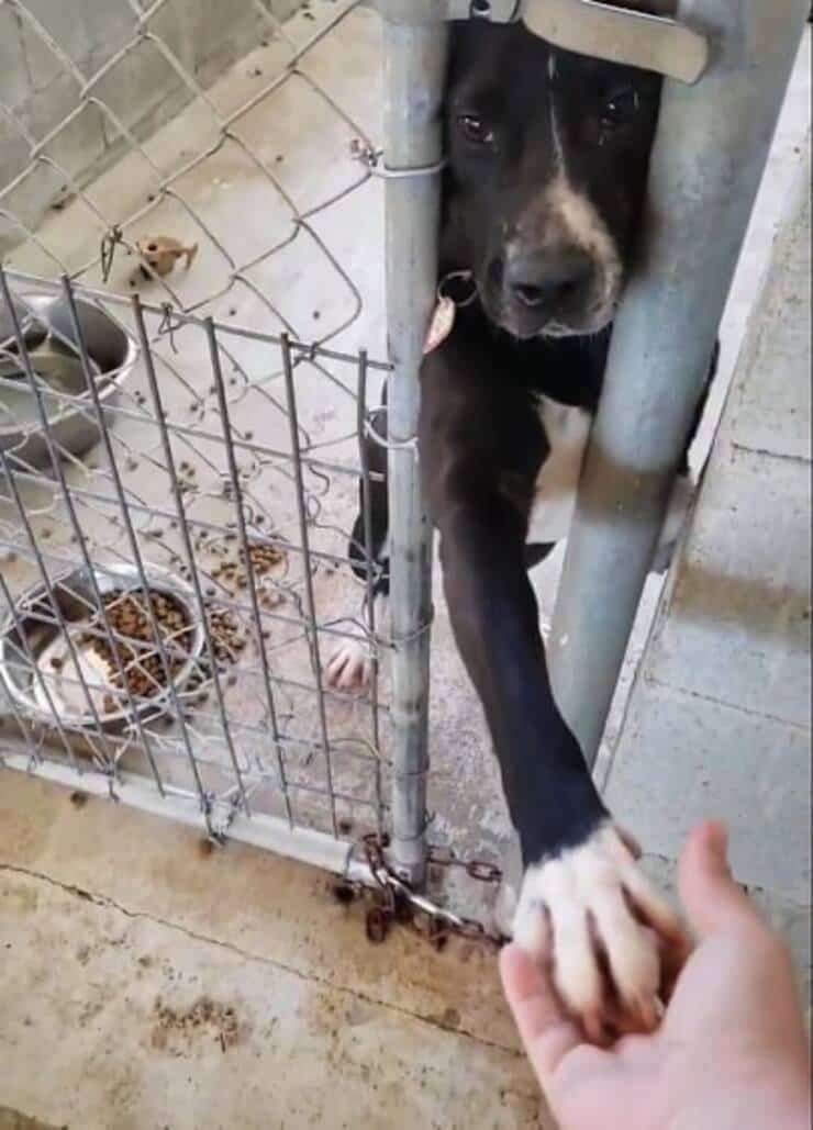 Cane nel rifugio