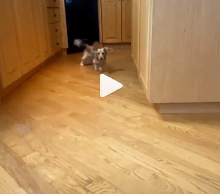 cane scappa inseguitori
