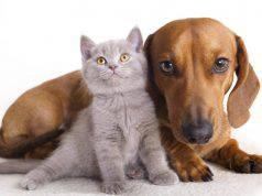 decreto resto a casa animali
