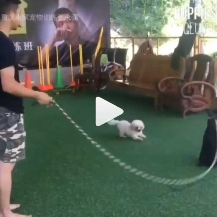 cani saltare corda