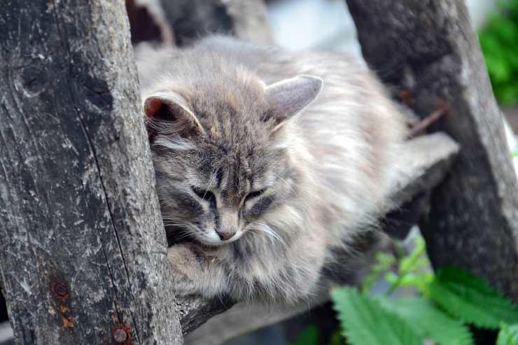 Il gatto malinconico (Foto Pixabay)