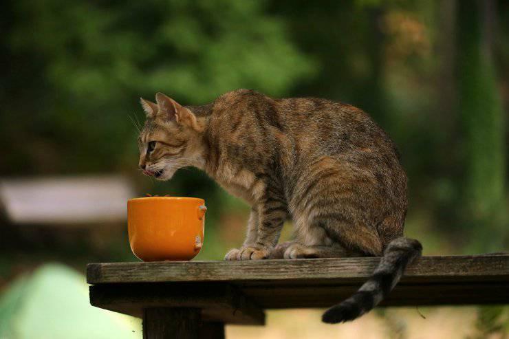 Olfatto del gatto