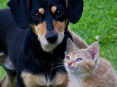 Cina cani gatti lista animali commestibili