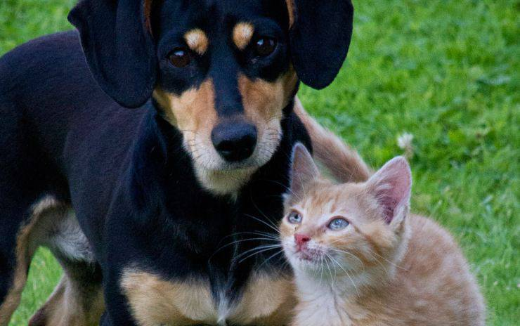 La Cina vieta il consumo di carne di cani e gatti