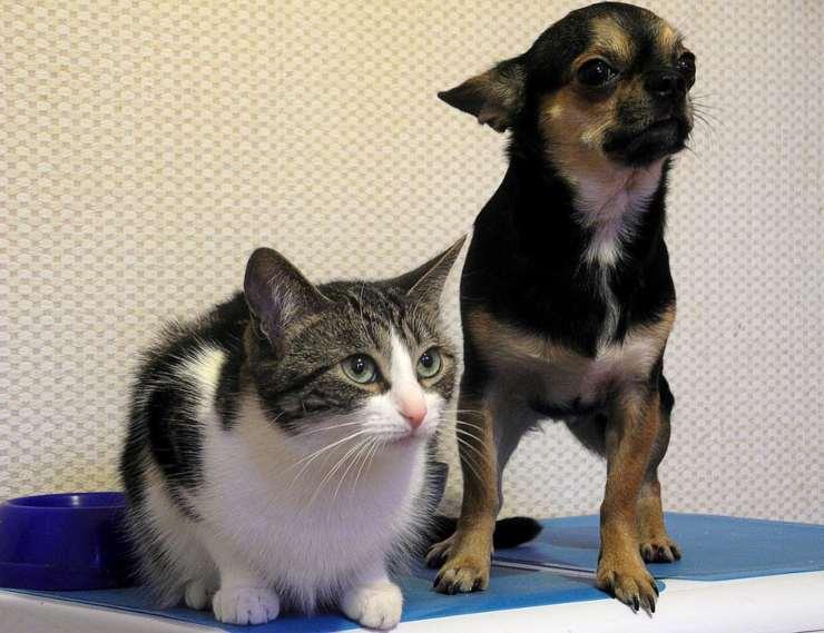 cina cani gatti mangiati