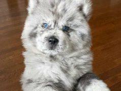 Un cane bellissimo (Foto Instagram)