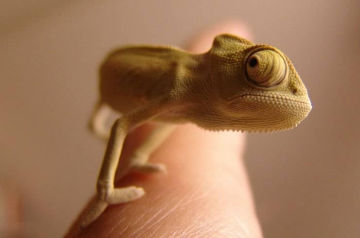 Specie di colore pallido
