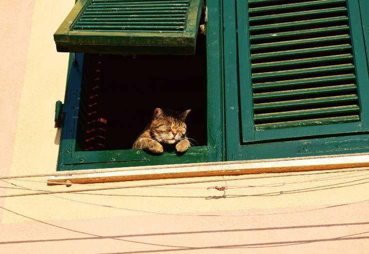 micio guarda fuori
