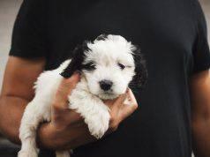 migliorare legame cane