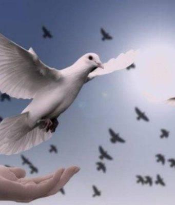 perche la colomba è il simbolo della pasqua