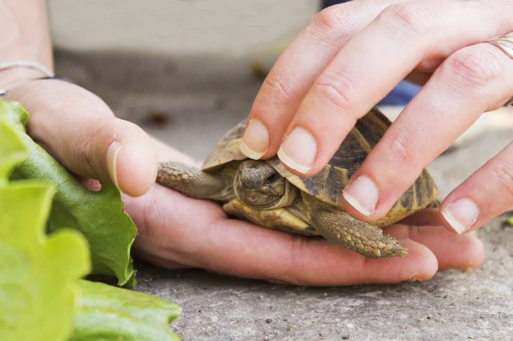 come accarezzare le tartarughe