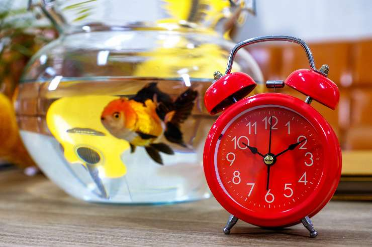 come e quando dormono i pesci rossi