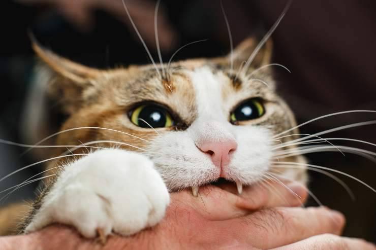 come far smettere il gatto di mordere