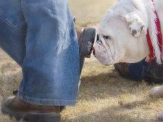 Come pulire le scarpe dalla cacca del cane