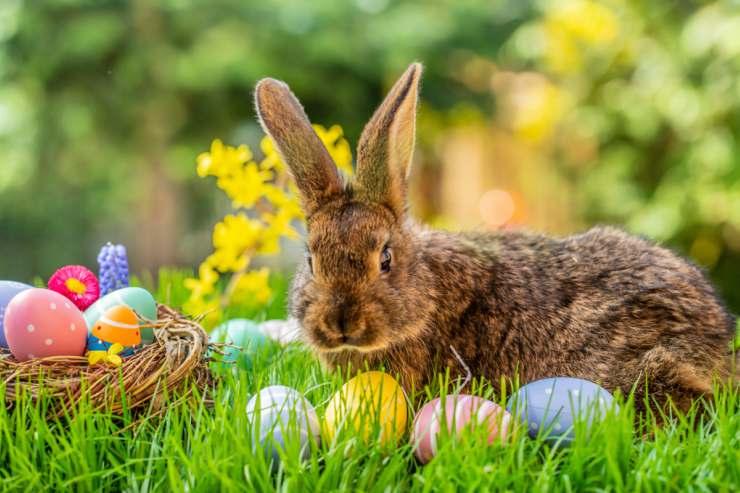 Coniglio come simbolo di Pasqua