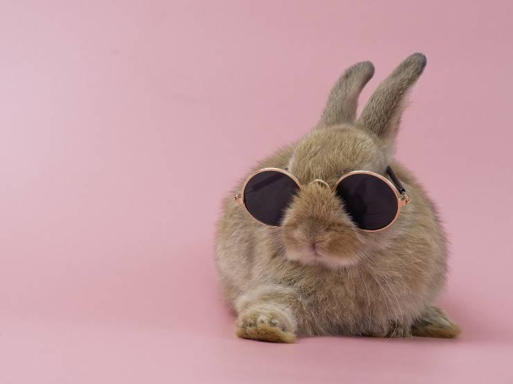 Spazzolare il coniglio e pulirlo