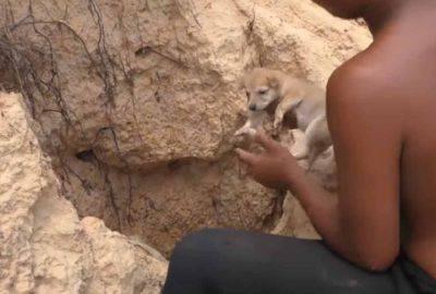 salva cuccioli