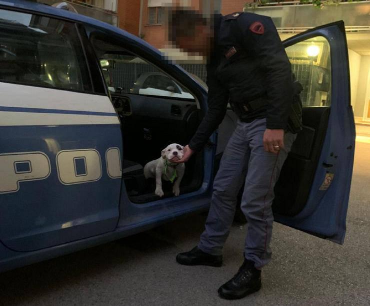polizia consegna cucciolo donna anziana